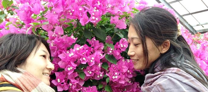 由布島の花