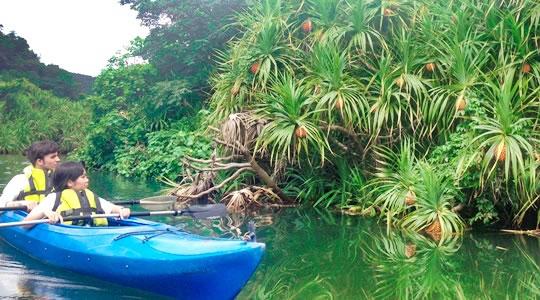 マングローブ林の中をカヌーで
