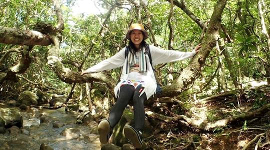西表島ユツンの滝