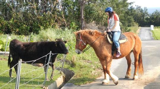 西表島で乗馬体験