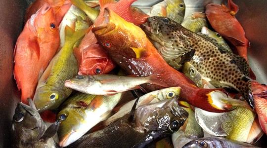 西表島釣り体験