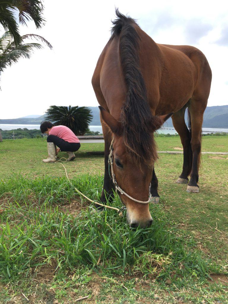 庭の草を食む馬