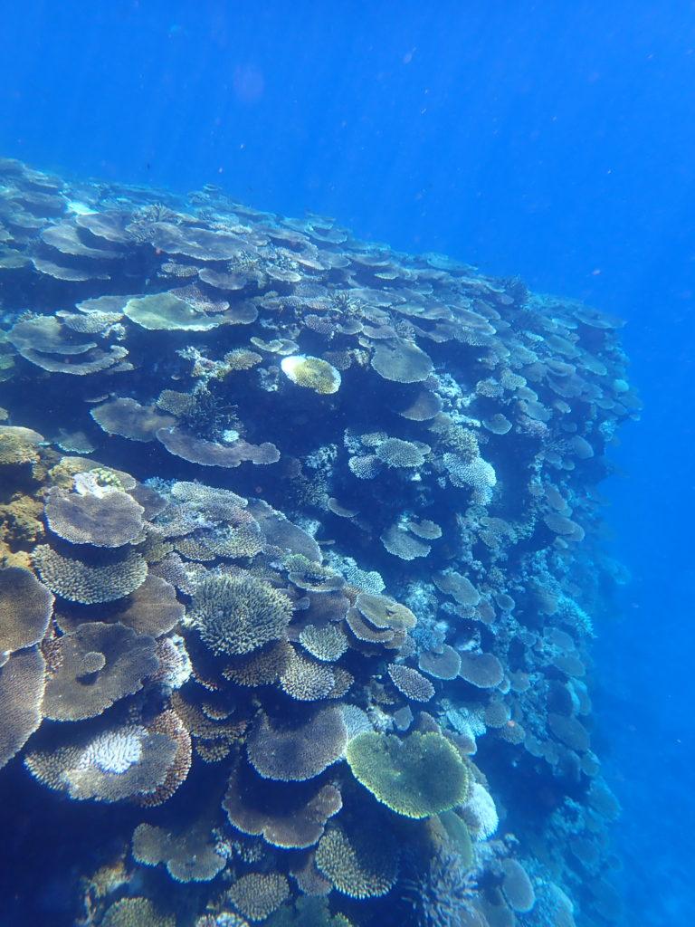 沖縄の離島シュノーケル