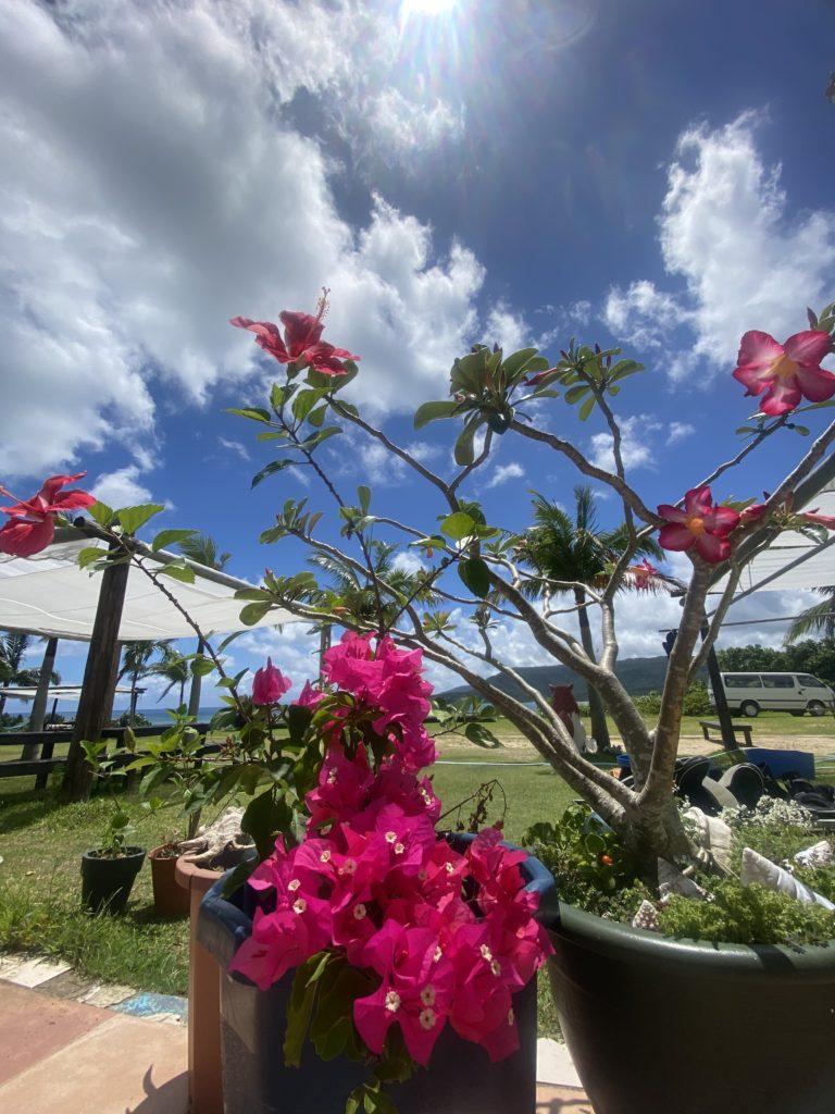 南国のピンクの花