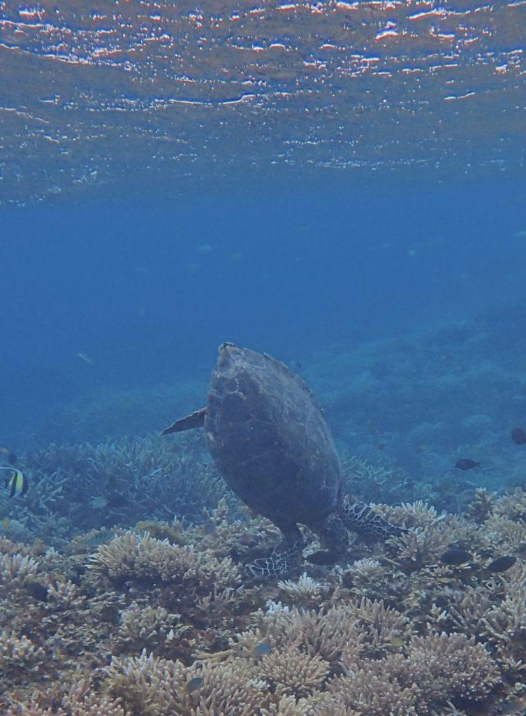 沖縄のシュノーケル