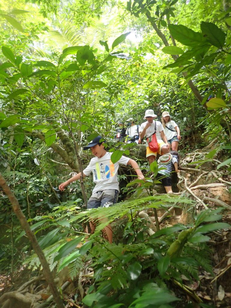 ジャングルツアー