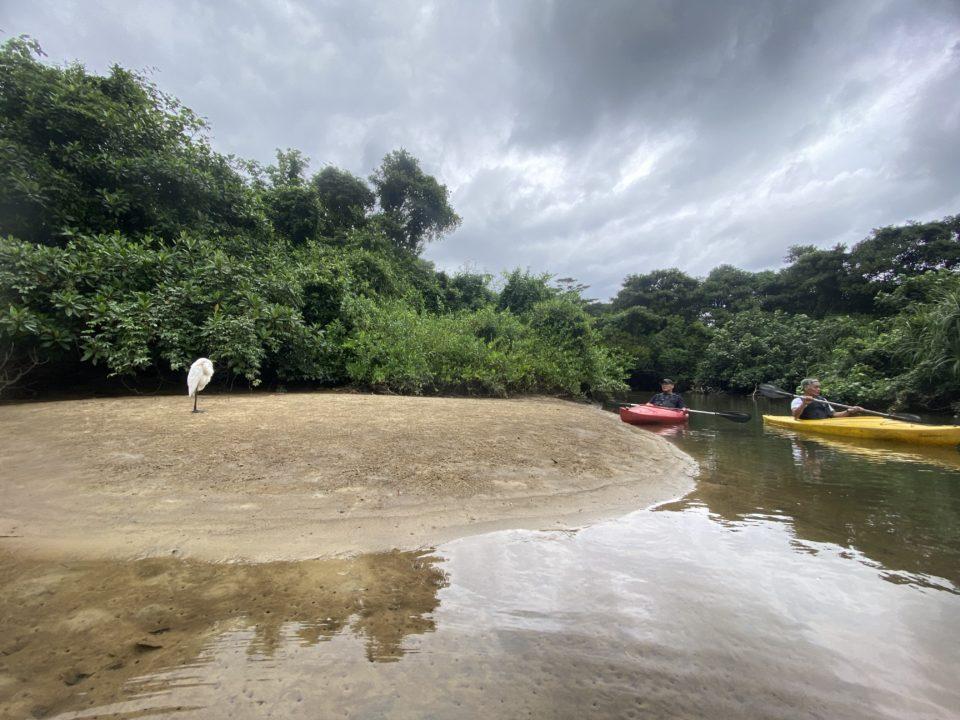 西表島でカヌー