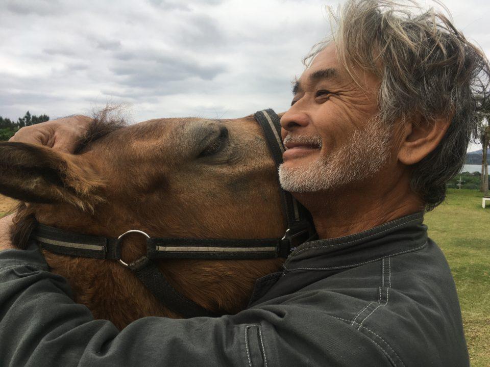 南の島の馬