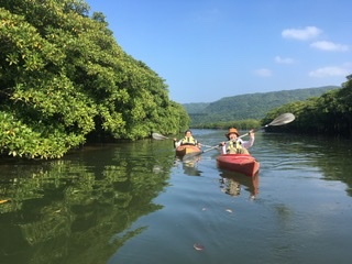 マングローブ林を漕ぐ