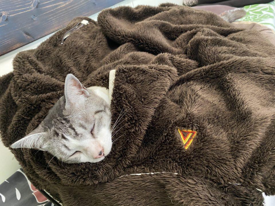 西表島の猫