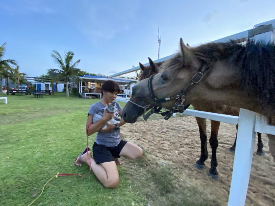 馬と猫のあいさつ