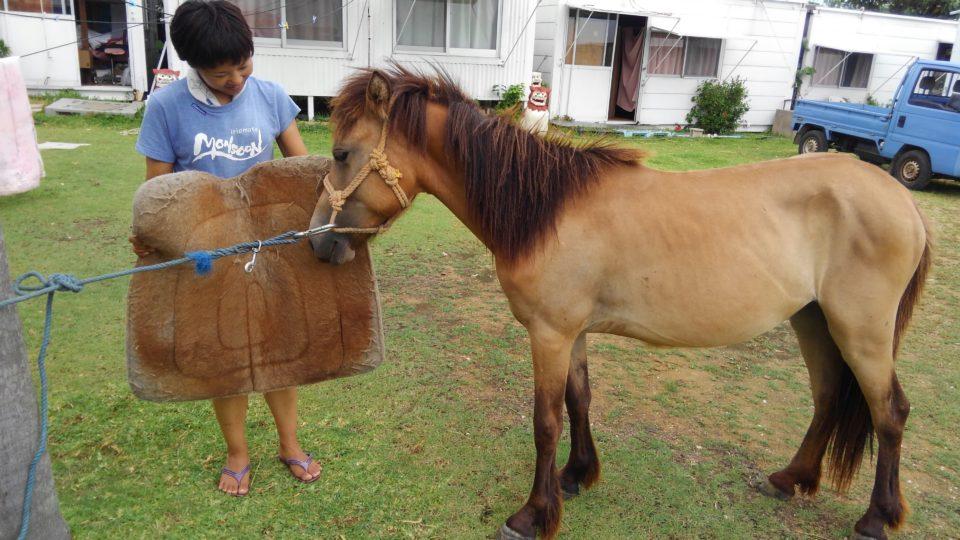 仔馬の調教