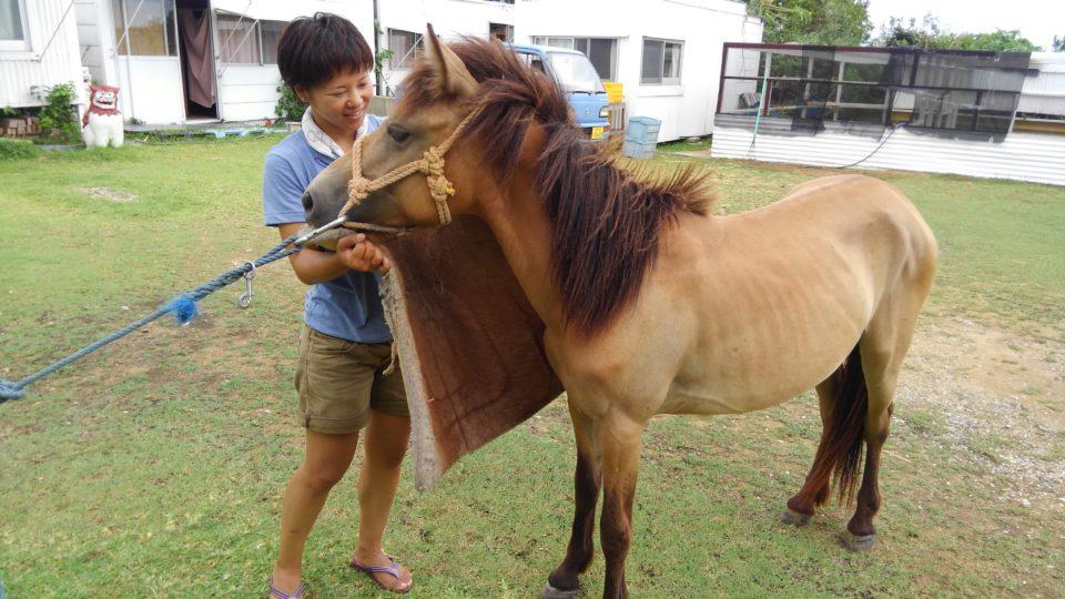 ウエスタン乗馬の鞍