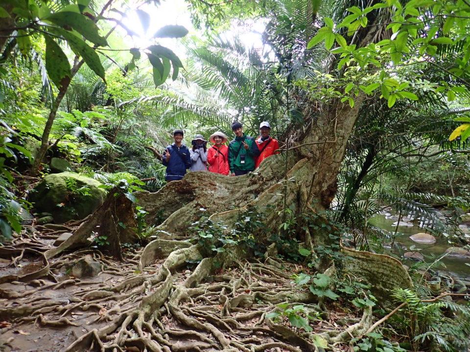 ジャングルの板根