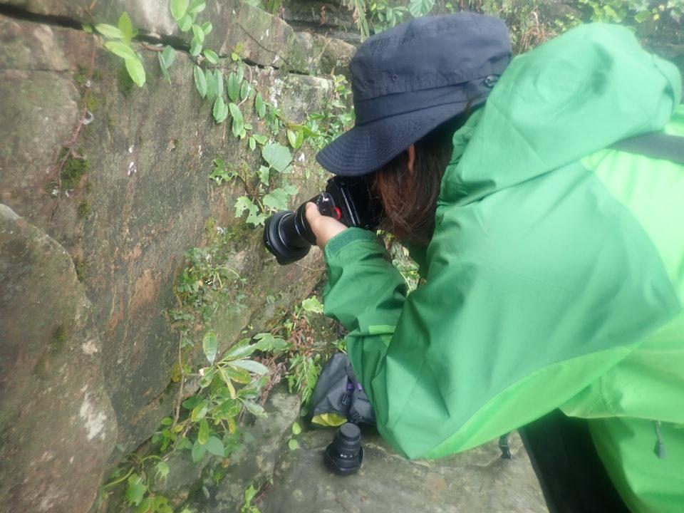 ジャングルで一眼レフカメラ