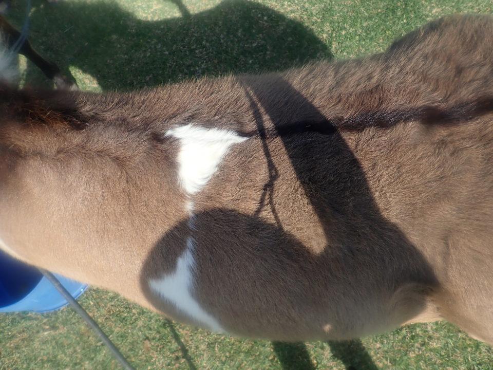 ハート柄の馬