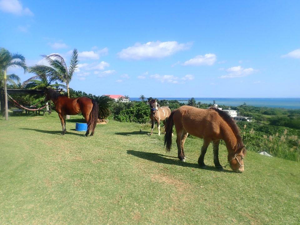 馬のいる庭
