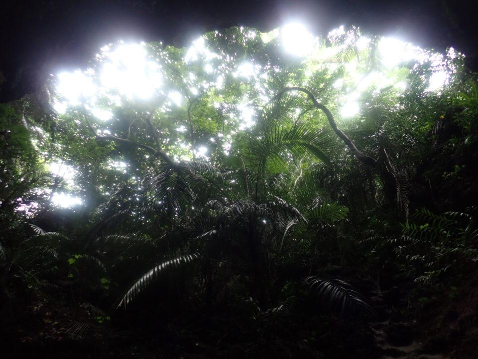 洞窟から見たジャングル