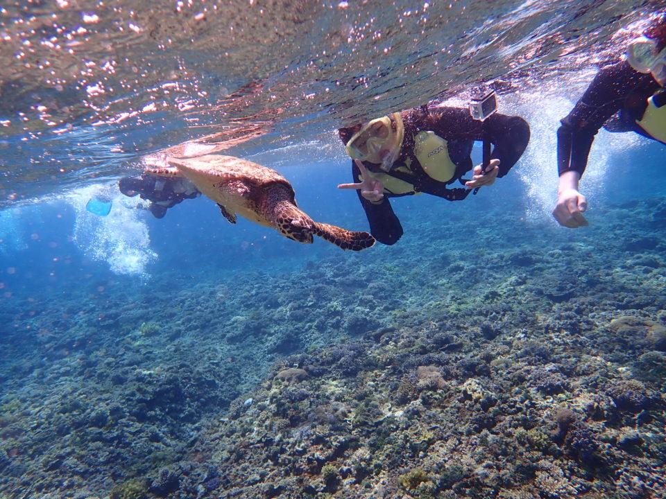 海亀と泳ぐシュノーケル