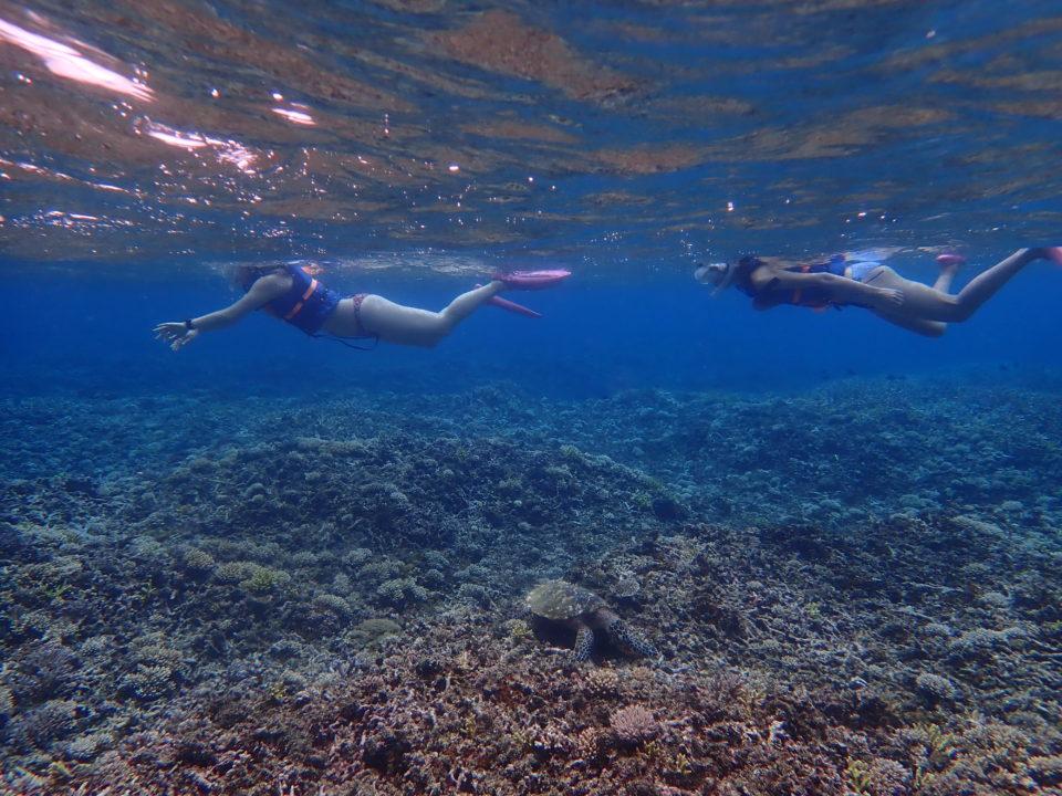 シュノーケリングで出会う海亀