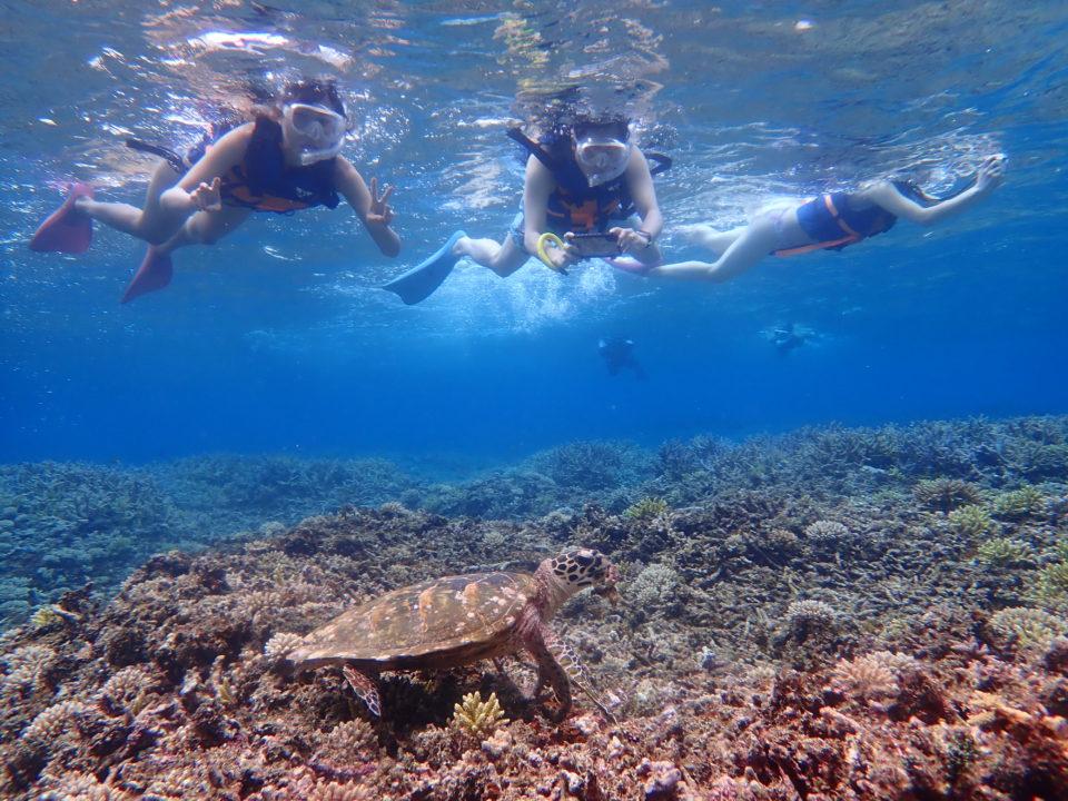 西表島の海亀と泳ぐ