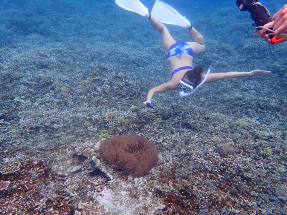 素潜り海中写真