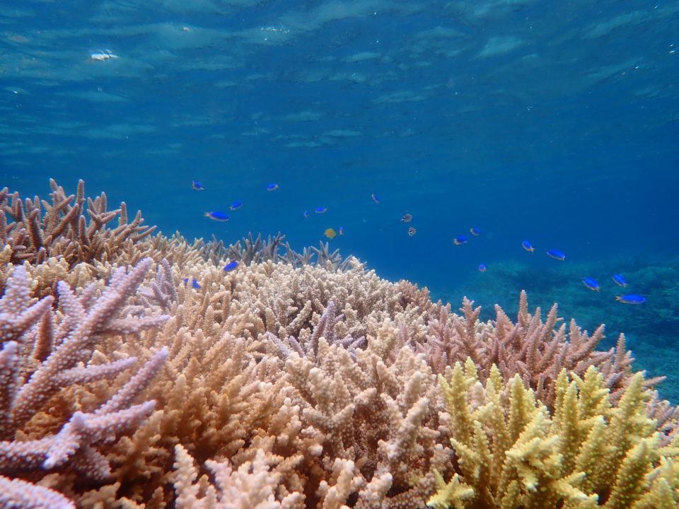 パステルカラーの珊瑚