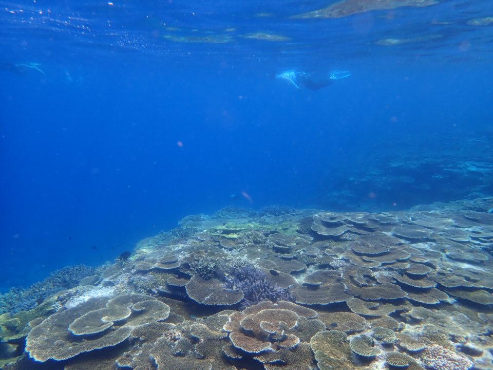 青い海とサンゴ