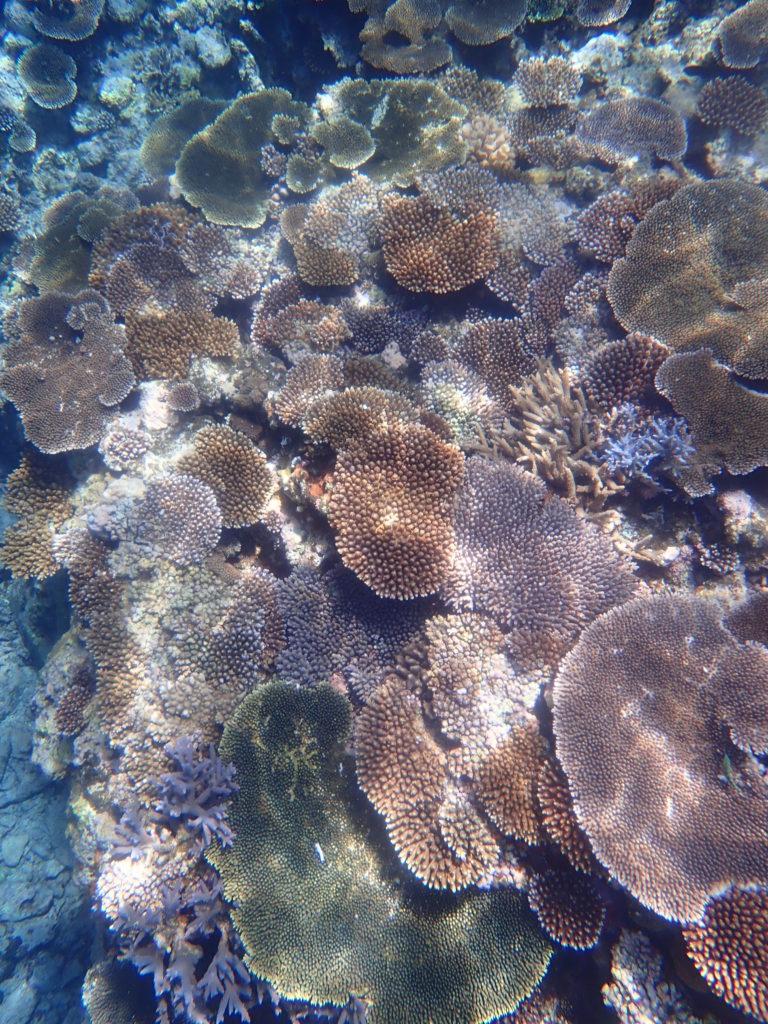 珊瑚に陽がさす