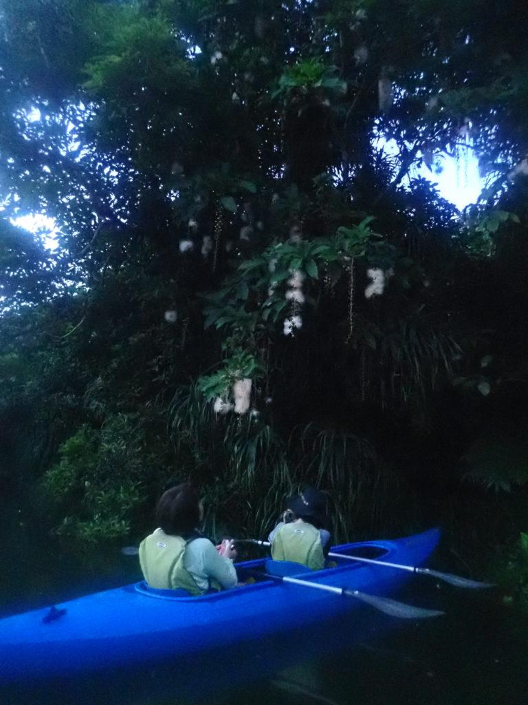カヌーで行くサガリバナツアー