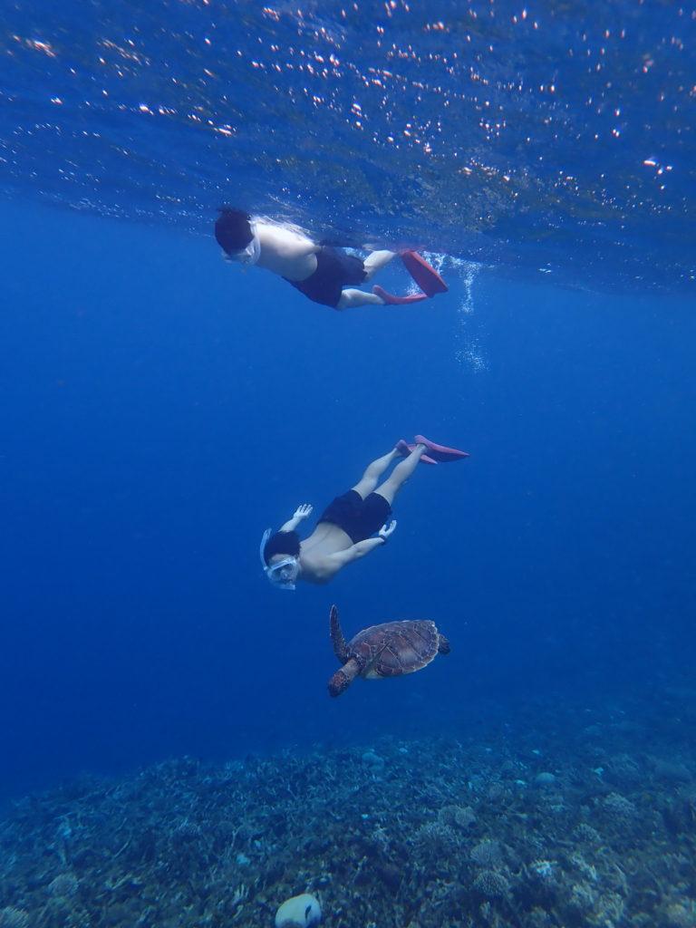 ウミガメと泳げるツアー
