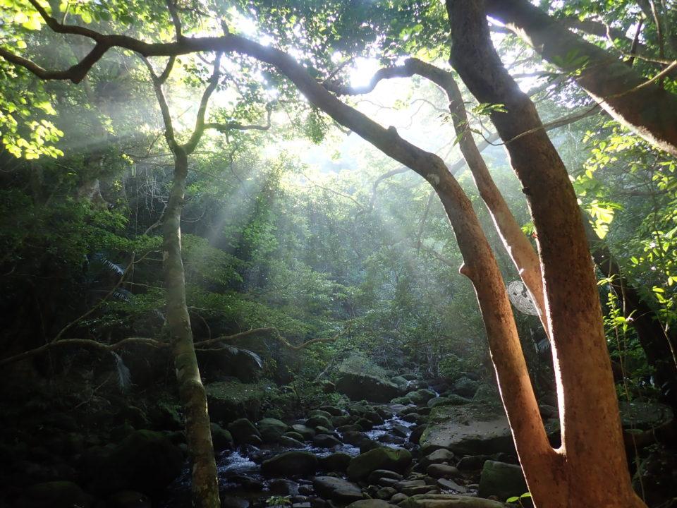 ジャングルに差し込む陽