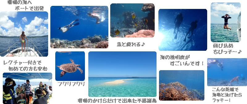 珊瑚の海シュノーケル1日ツアー