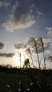 風景・植物 482