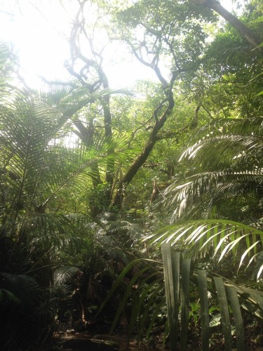 雨のジャングル探検 洞くつ探検