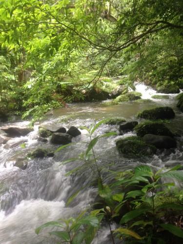 増水した西表島の滝