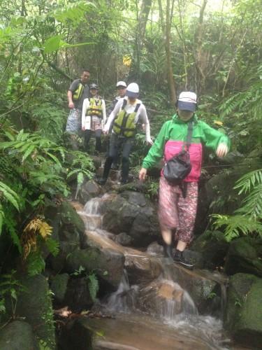 雨と西表島のジャングル