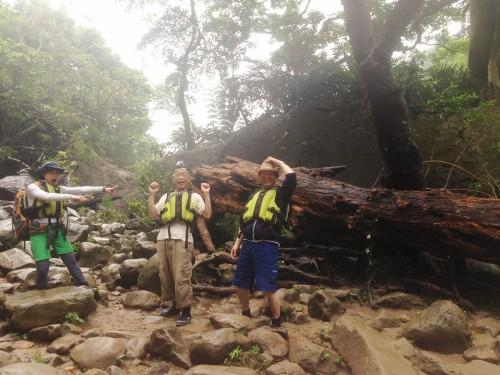 雨で流された巨大な流木