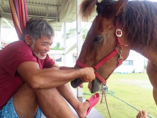セイシカ テラスの馬