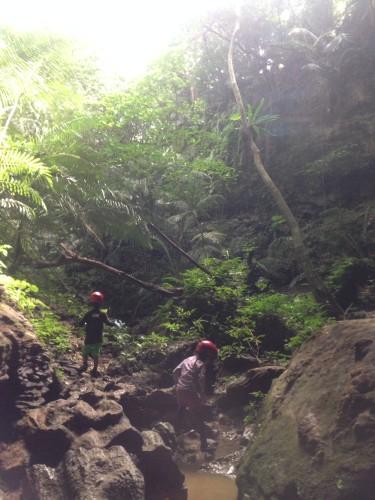 ジャングルのキジムナー