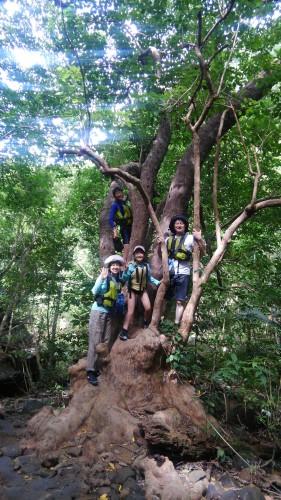 木登り家族