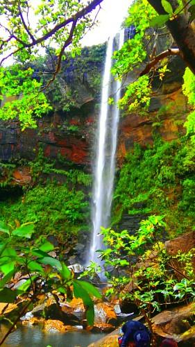 サガリ花と滝