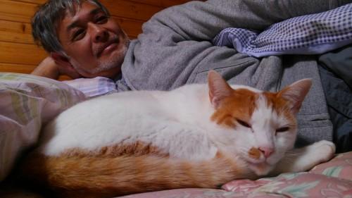 西表島の家猫