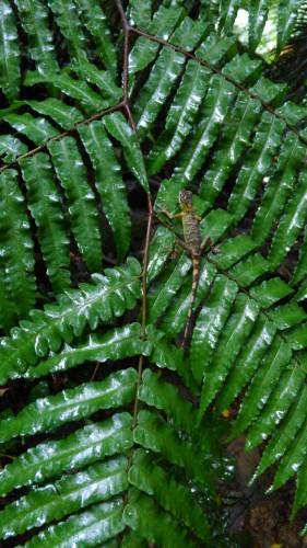 雨とキノボリトカゲ