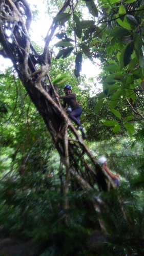 ジャングルで木登り