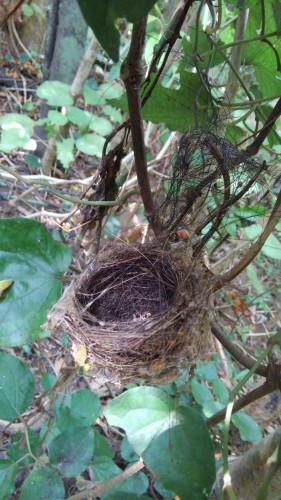 ジャングルで鳥の巣