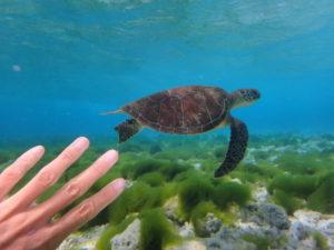 海亀に会うシュノーケル