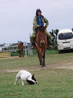 懲りずに馬に乗る