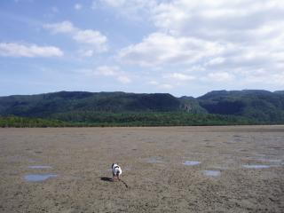 船浦の干潟