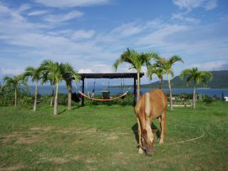 馬のいる癒しの宿
